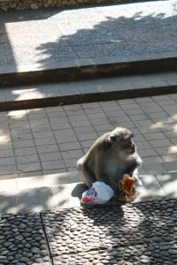 Monkey-Theft